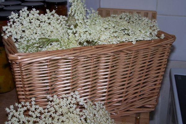 How do you make Elderflower Champagne | Find a recipe for Elderflower Champagne